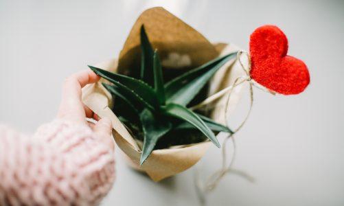 Kosmetyki z aloesu – poznaj zalety Aloe Vera